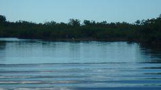Roseate Spoonbills close to Everglades National Park Everglades National Park, National Parks, Mountains, Nature, Travel, Image, Naturaleza, Viajes, Trips