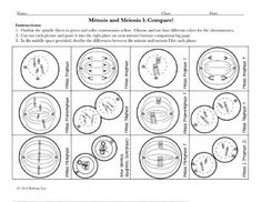 Compare Mitosis and Meiosis: Cut and Paste Activity and Worksheet Science Words, Science Facts, Science Lessons, Life Science, Science Worksheets, Science Curriculum, School Worksheets, High School Biology, High School Science