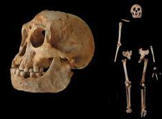 Los humanos son sospechosos del genocidio de los 'hobbits'