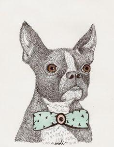 Illustrations of Fancy Animals