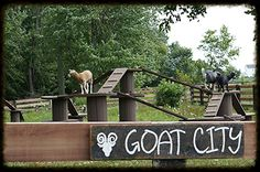 Watch and feed our friendly herd of goats as they play and frolic on their elevated play structure. Description from ecocenterohio.com. I searched for this on bing.com/images