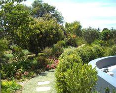If you'd love to transform your garden into a flourishing Fynbos garden, here are tips from experienced indigenous gardener, Alta Barnard.