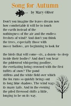 Poem by Mary Oliver about autumn. Song of Autumn. Come explore Adorable Fall Finds, Sacred in the Everyday, Inspirational Quotes as well as Autumn Decor's Cozy Warmth. Poetry Quotes, Words Quotes, Wise Words, Quotes Quotes, Mary Oliver Quotes, Good Times Quotes, Find Quotes, Encouragement Quotes, Wisdom Quotes