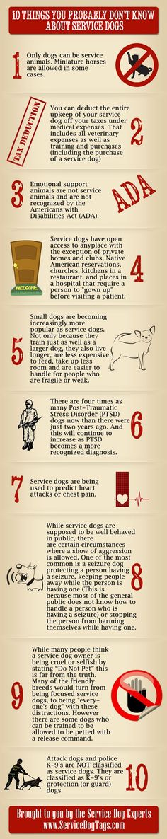 This service dog infographic includes information about service dogs and all the ways they assist people. More and more are bing used for PTSD by veterans.