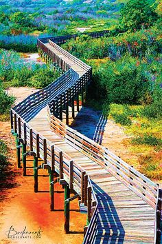 Colorful winding boardwalk path through a nature preserve with scrub, brush and flowers in St. Petersburg, FL. With blue, green, orange, yellow and purple