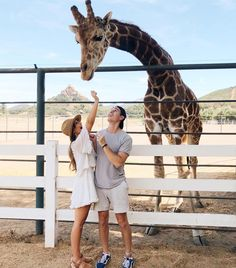 Kristin Johns, Zoo Pictures, Giraffe Pictures, Couple Pictures, Couple Relationship, Cute Relationship Goals, Cute Relationships, Life Goals, Tall Boyfriend