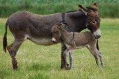 Image result for donkey palm.sunday images