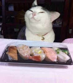 Sushi Cat is excited for sushi.