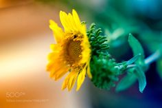 A Flower  by MichaelKrivoshey #nature #mothernature #travel #traveling #vacation #visiting #trip #holiday #tourism #tourist #photooftheday #amazing #picoftheday