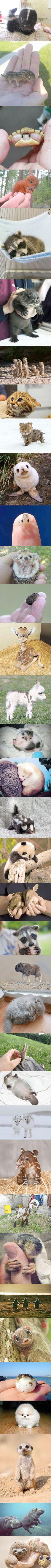 Ahhh... Cute Unusual Animals List #cool