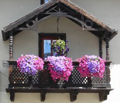 window boxes with cascading flowers. are those petunias?