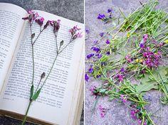 polne-suszone-kwiaty-diy-obrazek-colormyday