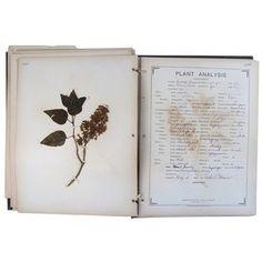 Fossil Plant Specimen Book