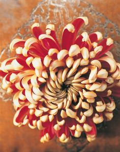 it is about time to get another flower tat.. this time it will be a chrysanthemum
