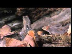 Neobyčejný svět hmyzu 1 Dokument by Tomáš Cahel - YouTube