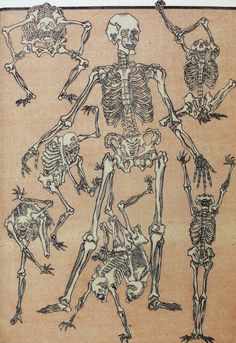 Already dying and will be dead for a long time Skeletons by Kawanabe Kyosai… Skeleton Drawings, Skeleton Art, Art Drawings, Folklore Japonais, Art Japonais, Skeleton Anatomy, Japanese Monster, Japan Illustration, Art Asiatique