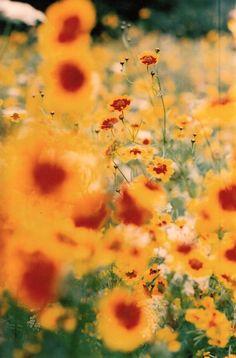 Film Photo By: Toby Harvard  Summer flowers. Pentax, 35mm film