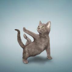 cute yoga kitten