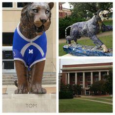 University of Memphis Admin Building & Tigers