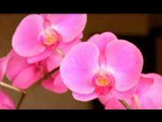 Орхидея и чего она не любит - YouTube