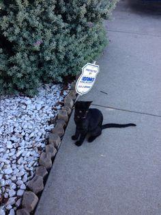 I love my photographers black cat