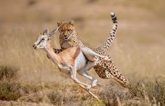 The Moment of Impact by Wim van den Heever on 500px