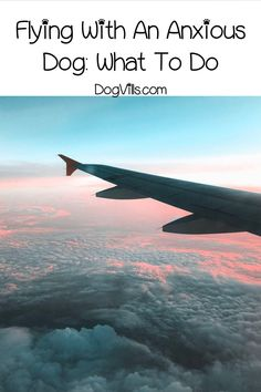 Did you know that some dogs are just as scared to fly as some people? Read on to learn about plane anxiety in dogs and find out how to cope. #dog #dogbehavior #doghealth Dog Anxiety, Dog Care Tips, Pet Care, Dogs On Planes, Fear Of Flying, Scary Places, Dog Signs, Dog Behavior