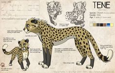 Tene -ref- by KaiserTiger on DeviantArt Big Cats Art, Furry Art, Cat Art, Cheetah Drawing, Cat Drawing, Cute Animal Drawings, Animal Sketches, Fantasy Creatures, Mythical Creatures