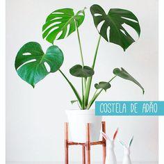 Bom diaaaaaa!! Preparese para conhecer as plantas mais amadas doshellip