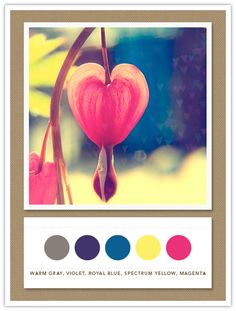 Colour Palette: warm grey, violet, royal blue, spectrum yellow, magenta