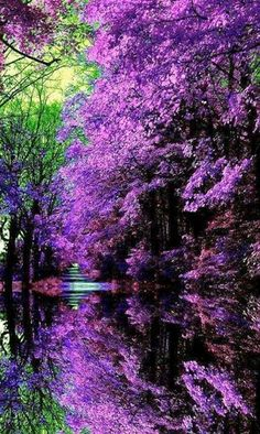 spectacular color of nature