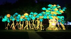 A garden all set to glow for Dh60 from tomorrow - Khaleej Times