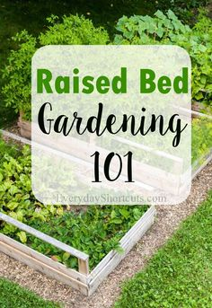 Get the answers you need to start and maintain a raised garden bed.