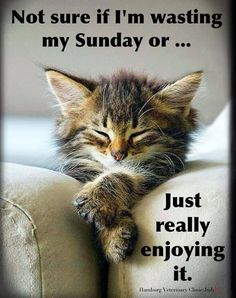 Sunday Humor, Sunday Quotes Funny, Funny Quotes, Funny Memes, Funny Sunday, Cat Memes, Videos Funny, Funny Cats, Cute Cats
