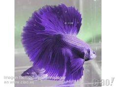 log sepan cuales son los animales exoticos y raros que no conoscan yo quiero que con este b I'd love a purple one (Robin)
