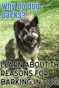 diabetes insípida chien de chasse