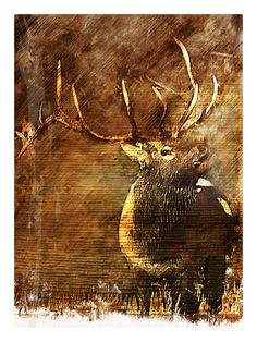 For the politically correct outdoorsman! Elk Silhouette In Bark ...