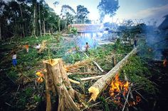 How Drug Smugglers Are Destroying Central America's Rain Forests