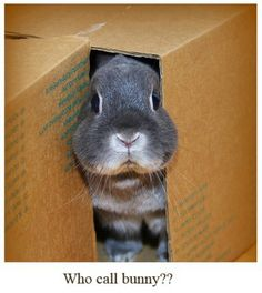 Bunny in a box, lol!