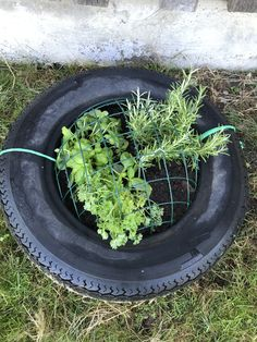 Herbal bar 🔹 old car tires 🔹 grille of a hanging basket (cheap hardware store … – Mint Plants For Chickens, Horse Paddock, Hanging Baskets, Kraut, Old Cars, Herbalism, Horses, Horse Stuff, Yard Ideas