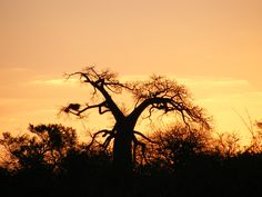sunset in the bushveld