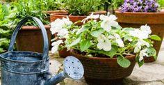 How to create a patio garden Small Space Gardening, Gardening Tips, Succulent Terrarium, Terrace Garden, Watering Can, Kai, Planter Pots, Succulents, Home And Garden