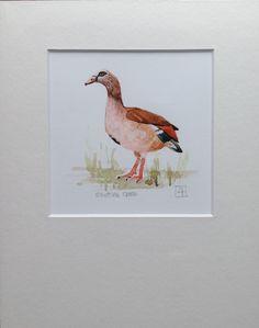 Egyptian Goose A5 Giclée Print www.louisehennigs.co.za