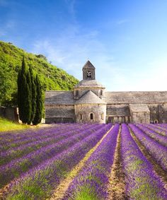 The Most Beautiful Places in France: Sénanque Abbey, Provence #Provencefrance