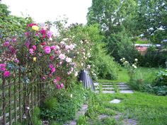 Our garden at West Kirby, Wirral - June 2013.