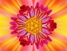 Flowerscope.  Wintergardens. Auckland, New Zealand.  Visit www.zarirmadon.com to view my portfolio.