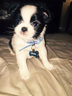 Puppy Pat #PETriots #Patriots