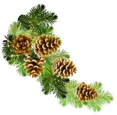 Pine and pine cones branch border clip art