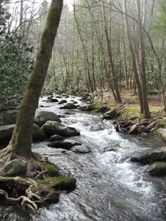 West Prong Trail, Smoky Mountains