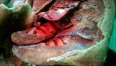 Proof of time travel? A old mummy was found wearing 'Adidas shoes' A mummy was found 'wearing Adidas' and people think it's proof of time travel Adidas Boots, Adidas Shoes Women, Adidas Sneakers, Grey Sneakers, Women Nike, Ufo, Time Travel Proof, Adidas Tumblr Wallpaper, Altai Mountains